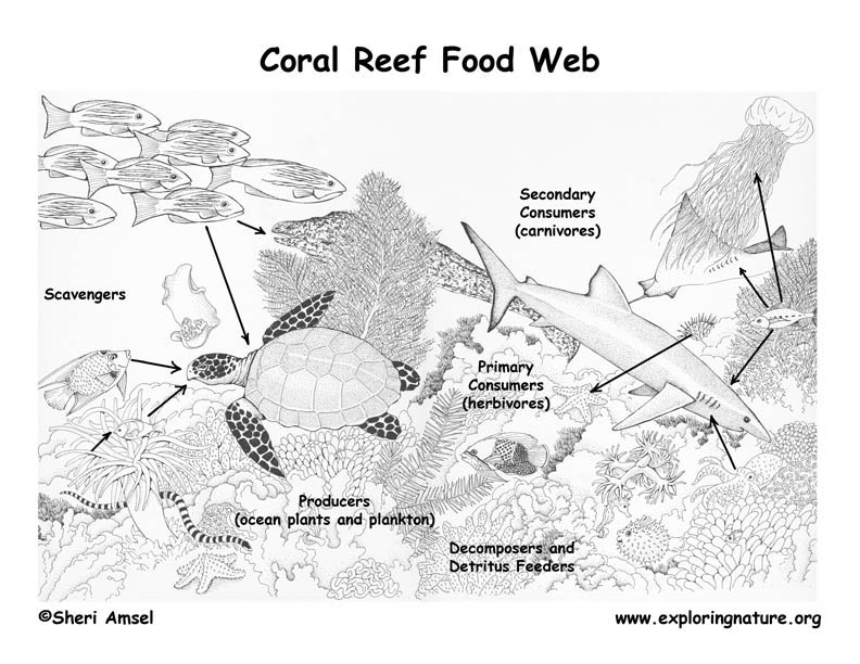 hawaiian coral reef coloring pages - photo#12